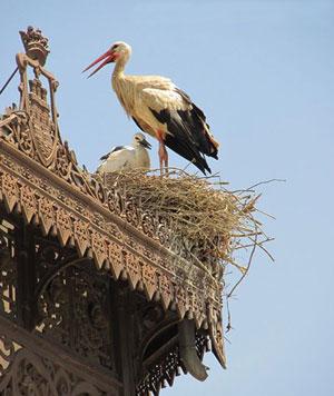 Storks in Alcala