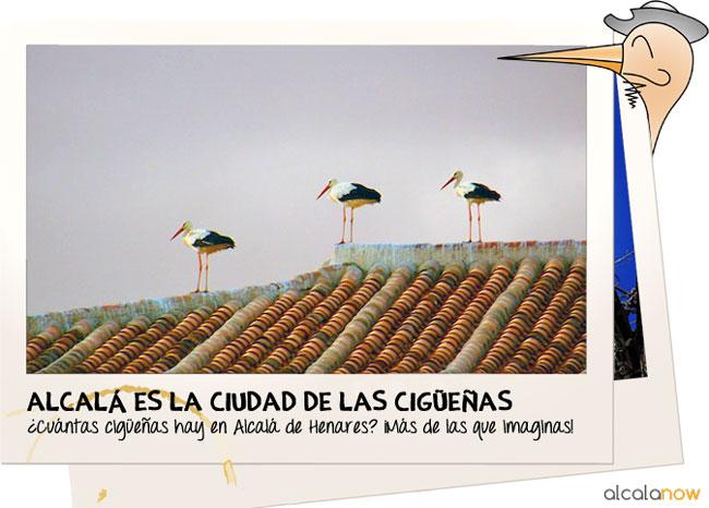 Cigüeñas en Alcala
